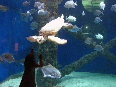 little girl watching turtle and fish swimming in a tank in a watercolor art effect                               photo