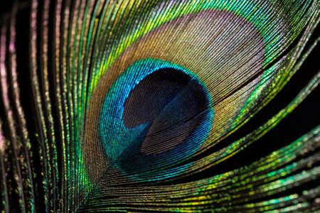 pluma de pavo real: El ojo de la pluma del pavo real, de cerca.