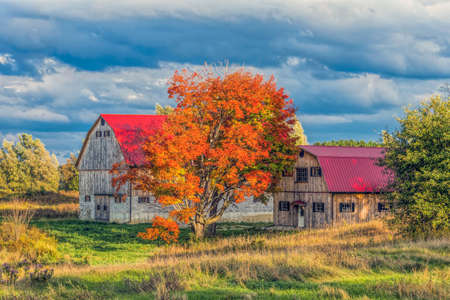 autumn colour: Rustic barn in the country with full autumn colour.
