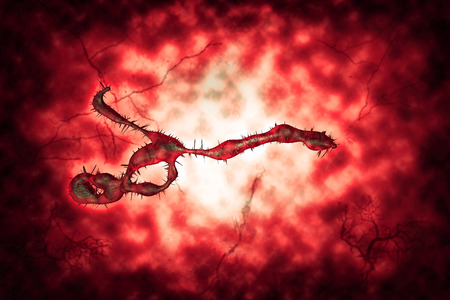 viral strain: Medical illustration of the Ebola virus