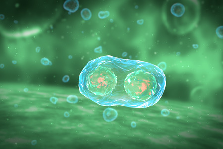 mutations: Cell Division Stages of Mitosis Stock Photo