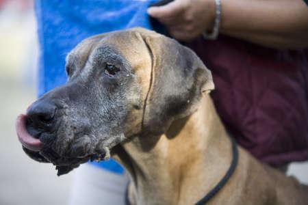 circumspect: dog 03 Stock Photo