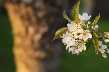 inflorescence: Inflorescence