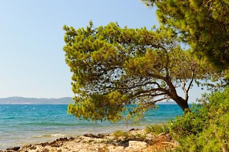 kornati: Isole Kornati-tree Archivio Fotografico