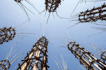 ロディ、イタリア野菜の大聖堂は、その中で樫の木が植えられている 108 の木の柱によって成り立っています。長年にわたり、それはゴシック様式の 写真素材