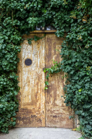 Porte recouverte de lierre Banque d'images - 97223198