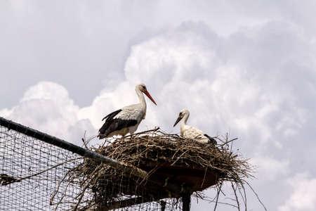Cigognes dans le nid sur une grande volière Banque d'images - 97217973