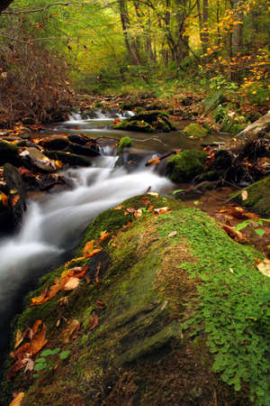 calming: small creek with moss and rushing water with fall colors.