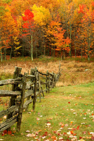 An old wooden fence leading the viewer into the colorfull woods during Autumn.