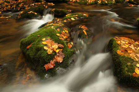 rushing water:   rushing water going between rocks covered with moss and fall colored leaves. Stock Photo