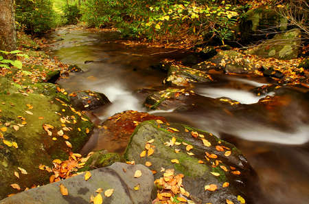 creek deep in the woods during fall of the year. Stock Photo