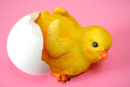 rna  chick coming out of an egg shell with a pink background. Stock Photo