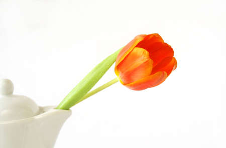 rna single tulip coming out of a tea pot spout with copy space available.rnrn Stock Photo