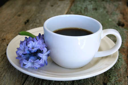 tea cup and saucer with a fresh cut Hyacinth flower all on an old piece of wood with great texture.