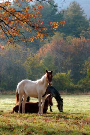 秋の日の空気と、気分を高めるために使用するソフト フォーカス フィルターで霧で 3頭の馬。