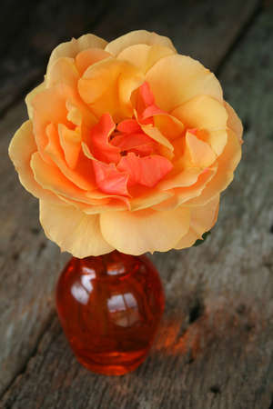 An orange rose in a vase.  With their blazing energy, orange roses are the embodiment of desire and enthusiasm.