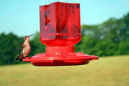 A Hummingbird at a feeder.  Shallow DOF used with focus on the eye.