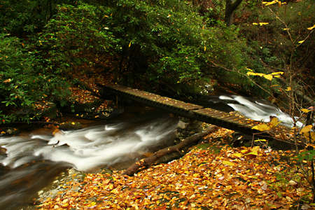 fortifying: Creek with small foot bridge during autumn of the year.