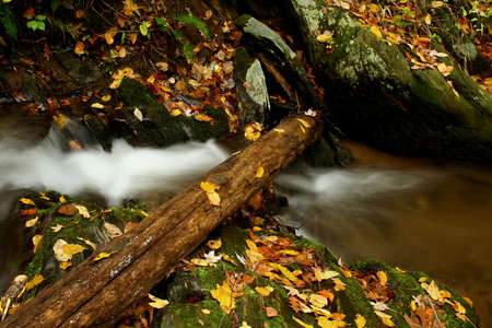 fortifying: Log in creek during the fall of the year.
