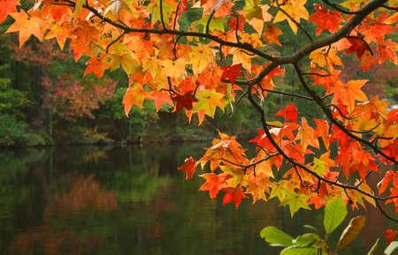 bladeren vallen met heldere kleuren. Kopieer beschikbare ruimte