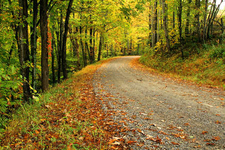 A dirt road with fall colors along the way. photo