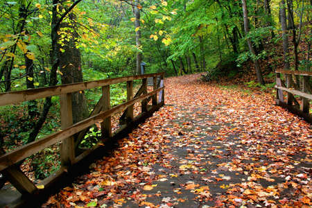 A wooden bridge covered in leaves that leads in to a walking path.