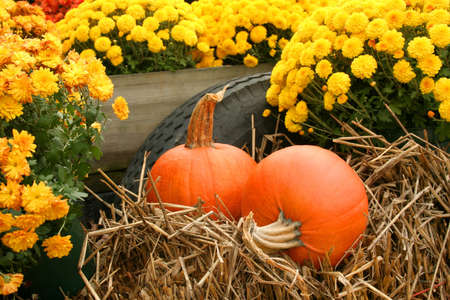 A fall still life with mums and pumpkins that are sitting on some hay.