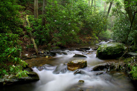 Creek deep in the woods on a summer day with the Rhododendron in bloom.  Used a slow shutter speed for a smooth look on the water. Stock Photo - 4584374
