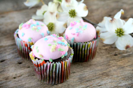 Pastel colored icing on chocolate cupcakes with dogwood blooms in the background. photo