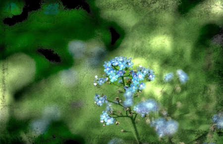Forget-me-not flowers done in layers with a textured background for a grunge look. Stock Photo
