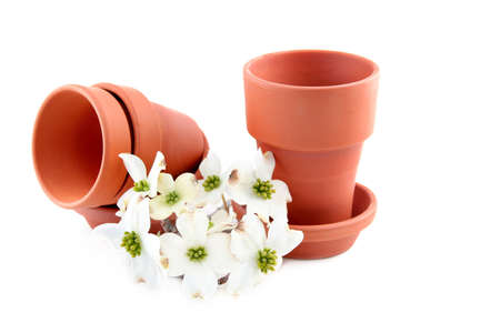 Three terracotta flower pots on a white background with white dogwood blooms. photo