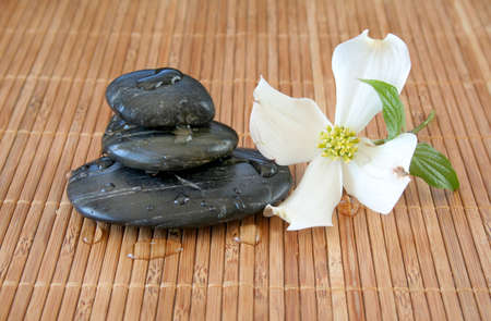Stacked massage stones with water drops on a bamboo background and a dogwood bloom laying to the side. photo