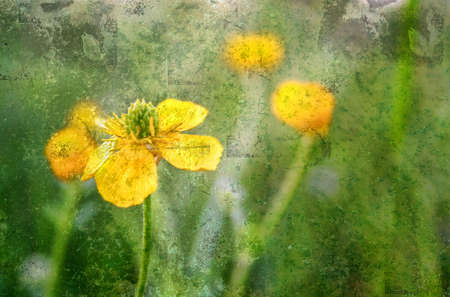 decaying: Yellow flowers capture in a field on a Spring day and given a grunge look with copy space. Stock Photo