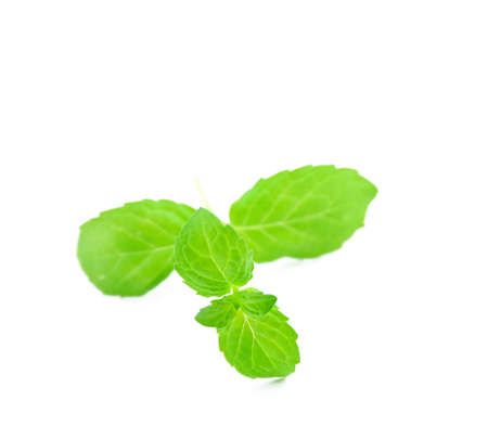 flavorful: Fresh mint leaves isolated on white in a square format and room for text.