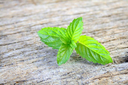 Fresh mint leaves on a rustic wood background with room for text.