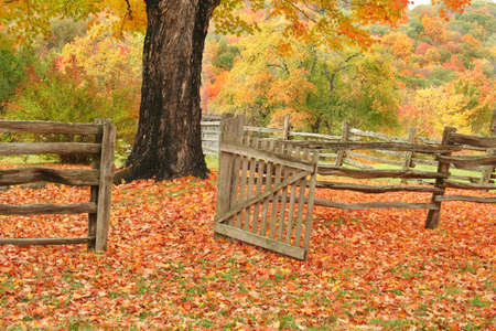 Split railed fence and open gate leading into a field with a maple tree and beautiful fall colors. Stock Photo