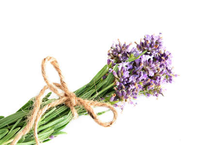room for your text: Fresh lavender tied with string to dry out and shot against a white background with room for your text.