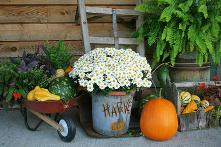 Harvest decorations with pumpkins and gords along with flowers and much more.