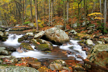 Beautiful stream during fall of the year with blurred water to have the cotton candy effect. photo