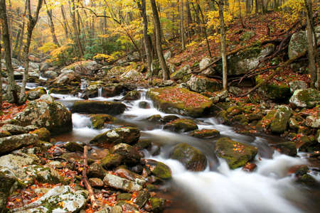 Beautiful stream during Autumn of the year with lots of trees and rocks covered in moss. photo