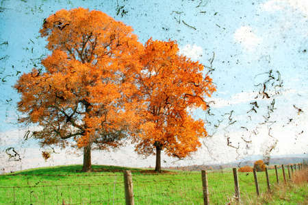 Two trees during fall of the year with a grunge texture look. photo