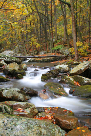 rock creek: Beautiful stream during fall of the year with blurred water to have the cotton candy effect.