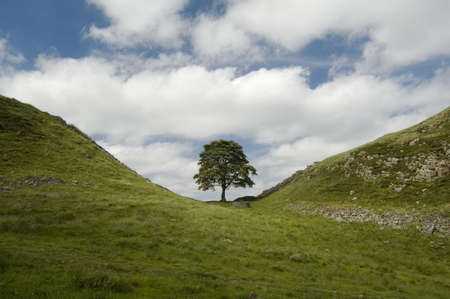 Sycamore Gap, Hadrians Wall scene from Robin Hood Prince of Thieves