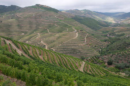 A view of the vineyards in one of the valleys near the Douro river. Douro Valley, Portugal. July 24, 2015. Stock Photo