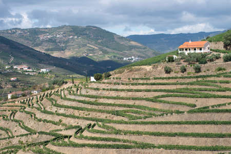 A vineyard in the Douro Valley. Douro Valley, Portugal. July 24, 2015.