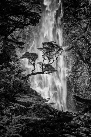 A peaceful serene scene of a  tree in front of a tranquil waterfall in the background taken with a long exposure so it is smooth and mystical. Banco de Imagens