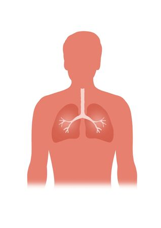 respiration: Illustration of person showing the lungs Stock Photo