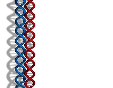 Red / blue DNA strands on white background Stock Photo - 2702585