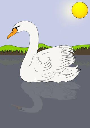 Illustration of a swan illustration