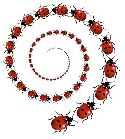 Illustration of a spiral of Ladybirds illustration